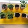 Biologieproject: kruiden kweken